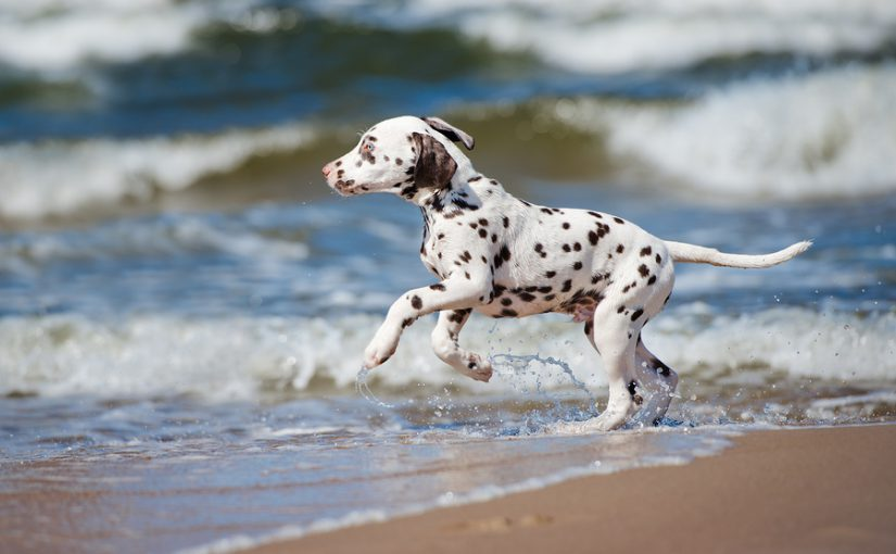 Bringing Pets to the Outer Banks