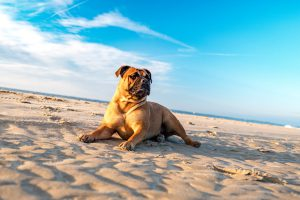 outer banks dog friendly